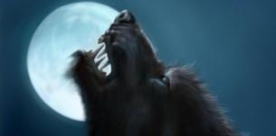 Do You Need A Moderator? CAM4 Moderator WerewolfHH